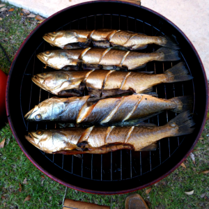Smoked Speckled Trout
